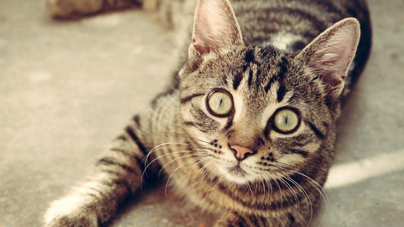 Kocie Imperium – koty Ermitaża